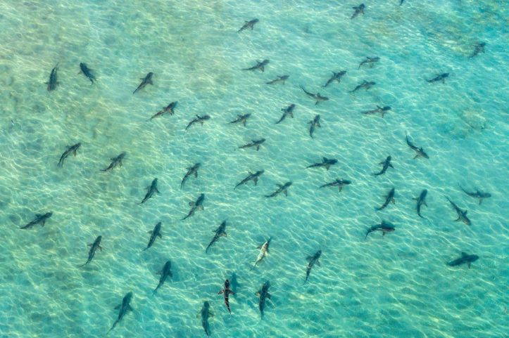 blacktip-sharks-juno-beach-florida-most-beautiful-picture-of-the-day-december-most-beautiful-pic-1513015844ngk48-1280x853